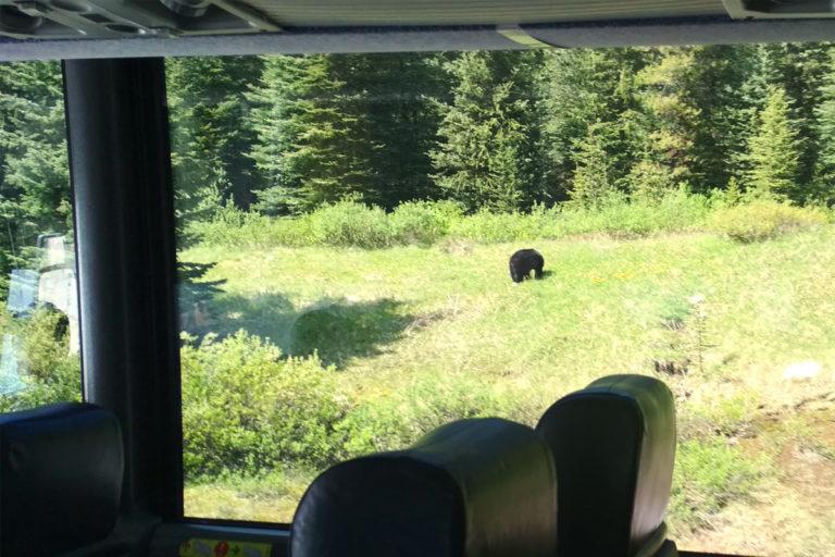 První medvěd
